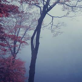 Aimelle - Blue Mist