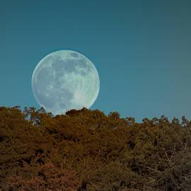 Karen Musick - Blue Moon Risign