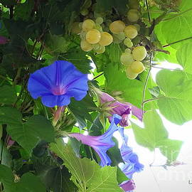 Lainie Wrightson - Blue Morning Glories and Grapes