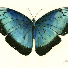 Blue Morpho butterfly - Juan Bosco
