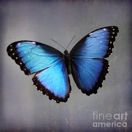 Karen Adams - Blue Morpho Butterfly Square