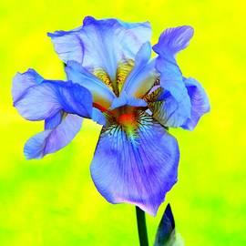 Davandra Cribbie - Blue Petals
