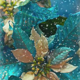 Teresa Wilson - Blue Poinsettia