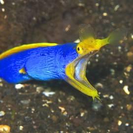 Sergey Lukashin - Blue ribbon eels