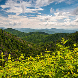 Dave Allen - Blue Ridge Parkway NC Summer Flowers