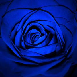Damijana Cermelj - Blue rose