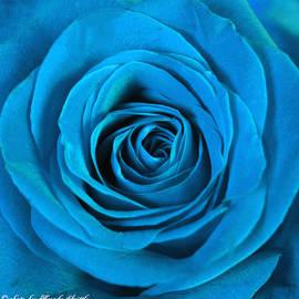 Brenda  Spittle - Blue Rose Macro