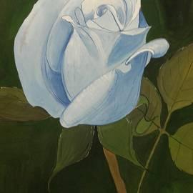 Pushpa Sharma - Blossom of rose