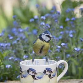 Blue Tit Mug - Tim Gainey
