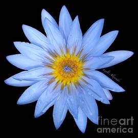 Layla Alexander - Blue Water Lily Star Sun square transparent