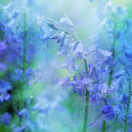 Margaret Goodwin - Bluebells