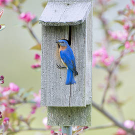 Bonnie Barry - Bluebird Nesting Box