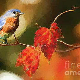 Darren Fisher - BlueBird of Autumn