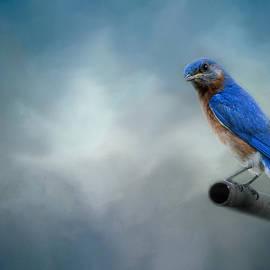 Jai Johnson - Bluebird On Patrol