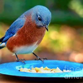 Sue Melvin - Bluebird