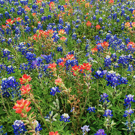 Brian Harig - Bluebonnets and Paintbrushes 3 - Texas