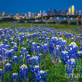 Inge Johnsson - Bluebonnets in Dallas