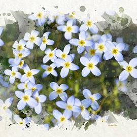 Christina Rollo - Bluet Flowers Watercolor Art