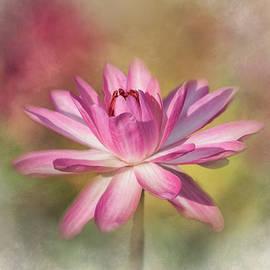 Kim Hojnacki - Blushing Pink
