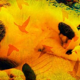 Kathy Barney - Bob The Abstract Cat