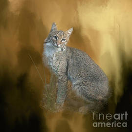 Renee Trenholm - Bobcat