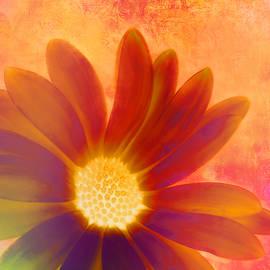 Kathy Franklin - Bold Color Daisy