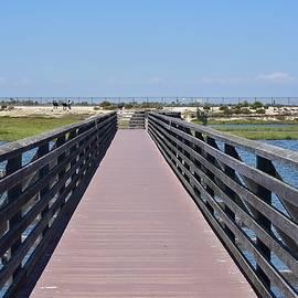 Linda Brody - Bolsa Chica Wetlands Viewing Pier