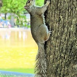 Elizabeth Dow - Boston Squirrel