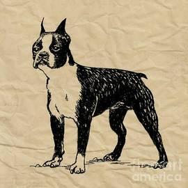 Blackwater Studio - Boston Terrier