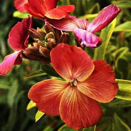CJ Anderson - Botanical Beauty
