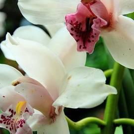 Katherine W Morse - Botanical Garden Orchids