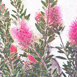 Jean Hall - Bottle Brush Tree