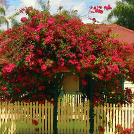Kaye Menner - Bougainvillea Cottage by Kaye Menner