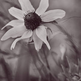 F Leblanc - Bouquet of One - Monochrome by fleblanc