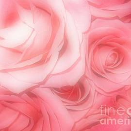 Rose Santuci-Sofranko - Bouquet of Pink Roses with Soft Touch Effect