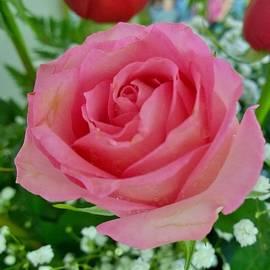 Gayle Miller - Bouquet rose