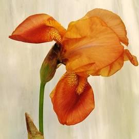 Marsha Heiken - Bowing To Nature