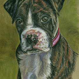 Norma Rowley - Boxer Pup