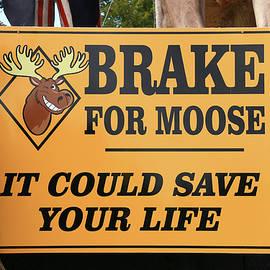 Allen Beatty - Brake For Moose