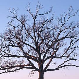 Ann Horn - Branching Out
