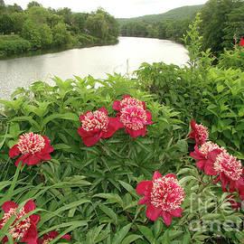 Betsy Zimmerli - Bridge of Flowers