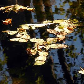 Chris Gudger - Bright Leaves  Dark Reflections