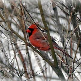Yumi Johnson - Bright red Bird