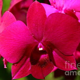 Christiane Schulze Art And Photography - Bright Scarlet Red Orchid