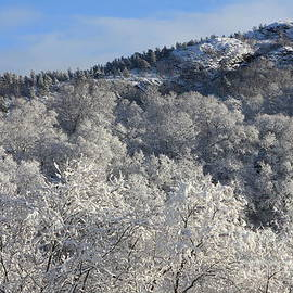 Sverre Andreas Fekjan - Bright snowy hill 2