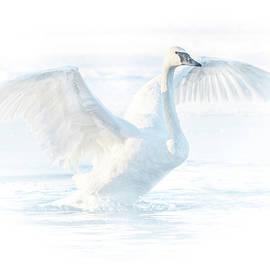 Patti Deters - Bright Swan #3
