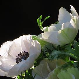 B Vesseur - Bright Windflower