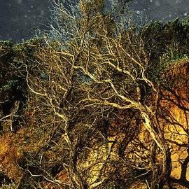 RC deWinter - Brilliant Desert