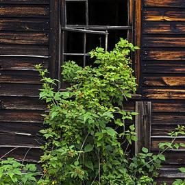 Debra Fedchin - Broken Barn Window
