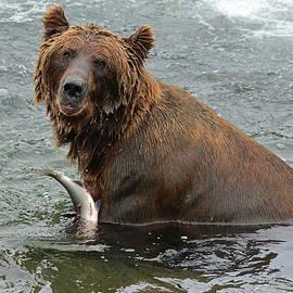 Jeffrey Hamilton - Brown Bear at Brooks Falls